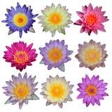 Inzameling van lotusbloembloem Stock Fotografie
