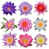 Inzameling van lotusbloembloem Royalty-vrije Stock Afbeelding