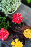 Inzameling van maancactussen stock foto's