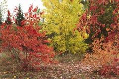 Inzameling van Mooi Kleurrijk groen Autumn Leaves, geel, oranje, rood De kleurrijke Herfst De Indische zomer Mellow Herfst gouden royalty-vrije stock afbeelding