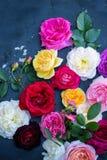 Inzameling van mooie rozen stock fotografie