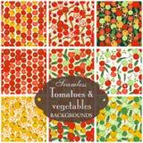Inzameling van naadloze achtergronden op het onderwerp van tomaat met v Stock Afbeeldingen