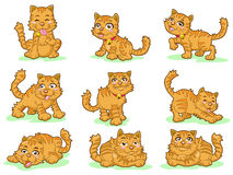 Inzameling van negen leuke katjes Stock Afbeelding