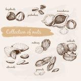 Inzameling van noten royalty-vrije illustratie