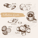 Inzameling van noten stock illustratie