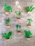 Inzameling van orchidee het hangen op bakstenen muur stock fotografie