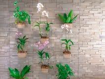 Inzameling van orchidee het hangen op bakstenen muur royalty-vrije stock afbeeldingen