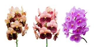 Inzameling van orchideebloem stock illustratie