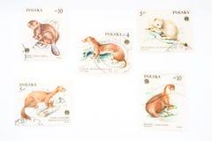 Inzameling van oude postzegels van Polen Stock Foto