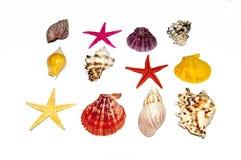 Inzameling van Overzeese Shells royalty-vrije stock afbeeldingen