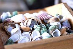 Inzameling van Overzeese Shells in Houten Doos Stock Afbeeldingen