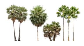 Inzameling van palmen op witte achtergrond wordt geïsoleerd die Stock Foto's