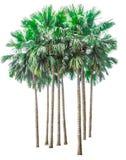 Inzameling van palmen op witte achtergrond wordt geïsoleerd die royalty-vrije stock foto's