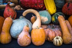 Inzameling van pompoenen bij een landbouwersmarkt royalty-vrije stock afbeeldingen
