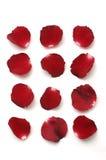 Inzameling van rood bloemblaadje Royalty-vrije Stock Afbeelding