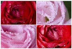 Inzameling van roze bloemen Stock Afbeelding