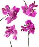 Inzameling van roze mooie orchidee stock foto