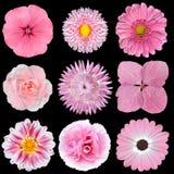 Inzameling van Roze Witte Bloemen die op Zwarte wordt geïsoleerdD royalty-vrije stock afbeeldingen