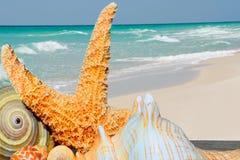 Inzameling van shells door oceaan Stock Afbeeldingen