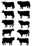 Inzameling van silhouetten van koeien en stieren Royalty-vrije Stock Foto