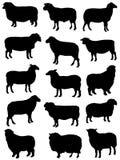 Inzameling van silhouetten van schapen Royalty-vrije Stock Afbeelding