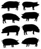 Inzameling van silhouetten van varkens Stock Afbeelding