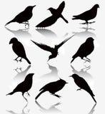 Inzameling van silhouetten van wilde vogels, vectoril Royalty-vrije Stock Fotografie