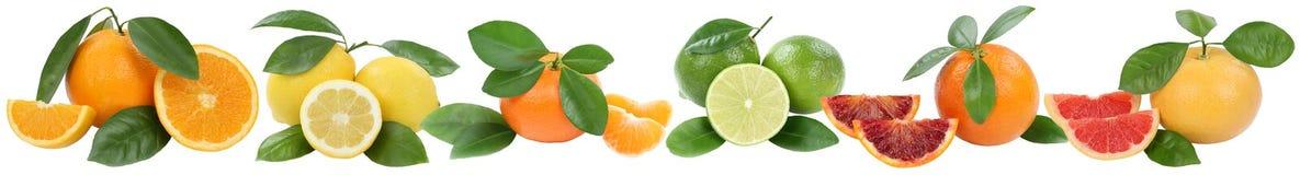 Inzameling van sinaasappelenmandarin de vruchten van de citroengrapefruit op een rij Royalty-vrije Stock Afbeeldingen