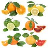 Inzameling van sinaasappelenmandarin de vruchten geïsoleerde van de citroengrapefruit Royalty-vrije Stock Foto
