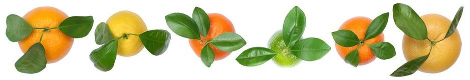 Inzameling van sinaasappelenvruchten hoogste mening van de citroenengrapefruit de op een rij Royalty-vrije Stock Fotografie