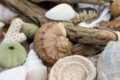 Inzameling van strandbevindingen Stock Afbeelding