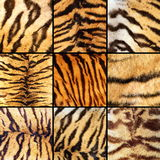 Inzameling van tijgerstrepen stock afbeelding