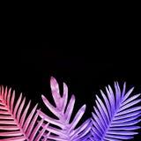 Inzameling van tropische bladeren, gebladerteinstallatie in gradiëntkleur op zwarte achtergrond vector illustratie