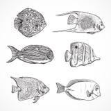 Inzameling van tropische vissen Uitstekende reeks van hand getrokken mariene fauna Royalty-vrije Stock Afbeeldingen