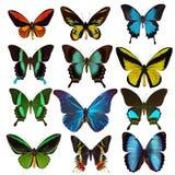 Inzameling van tropische vlinders Royalty-vrije Stock Afbeeldingen