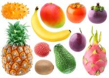 Inzameling van tropische vruchten Royalty-vrije Stock Afbeeldingen