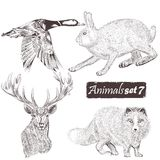 Inzameling van vector gedetailleerde dieren voor ontwerp Stock Afbeeldingen