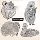 Inzameling van vector gedetailleerde dieren voor ontwerp Stock Foto's