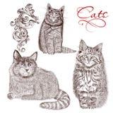 Inzameling van vector gedetailleerde hand getrokken katten Stock Afbeeldingen