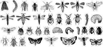 Inzameling van vector gedetailleerde insecten Stock Afbeeldingen