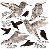 Inzameling van vector hoog gedetailleerde zoemende vogels Stock Foto's