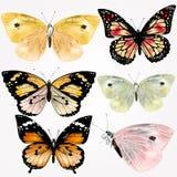 Inzameling van vector realistische vlinders voor ontwerp stock illustratie
