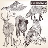 Inzameling van vectorhand getrokken gedetailleerde dieren Royalty-vrije Stock Afbeelding