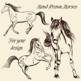 Inzameling van vectorhand getrokken paarden Stock Foto