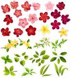 Inzameling van verschillende bloemen en bladeren Stock Afbeeldingen