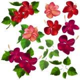 Inzameling van verschillende bloemen en bladeren Stock Fotografie