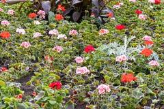 Inzameling van verschillende kleurenbloemen stock afbeelding