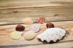 Inzameling van verschillende tropische zeeschelp op houten textuurlijst in selectieve nadruk stock foto's