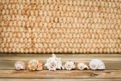 Inzameling van verschillende tropische zeeschelp op houten textuurlijst in selectieve nadruk royalty-vrije stock afbeelding