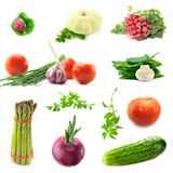 Inzameling van verse groenten Royalty-vrije Stock Afbeeldingen